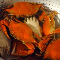 Jersey Shore Crab Sauce Pasta